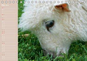 Schafe / Geburtstagskalender (Tischkalender 2016 DIN A5 quer)