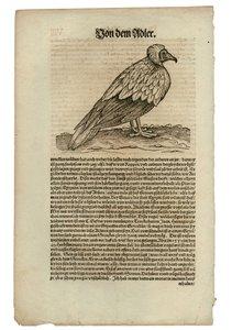 Ein Bild von der Natur - Die Tierzeichnungen von Konrad Gesner (