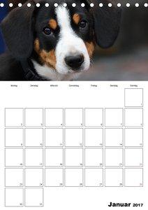 Entlebucherr Sennenhunde begleiten Sie durch das Jahr