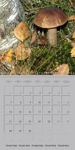 Looking for mushrooms (Wall Calendar 2016 300 × 300 mm Square)