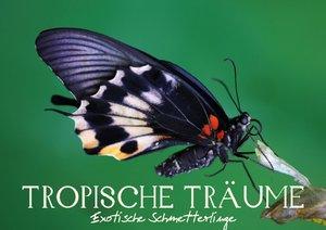 Tropische Träume - Exotische Schmetterlinge (Posterbuch DIN A4 q