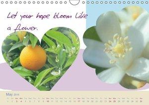 Start to Think Positive (Wall Calendar 2015 DIN A4 Landscape)