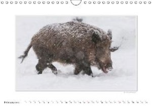 Emotional Moment: The Boar. UK-Version (Wall Calendar 2015 DIN A