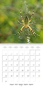 European Spiders (Wall Calendar 2015 300 × 300 mm Square)