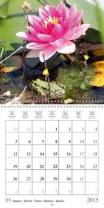 Garden pond fascination (Wall Calendar 2015 300 × 300 mm Square)