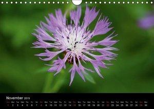 Summer Flowers (Wall Calendar 2015 DIN A4 Landscape)
