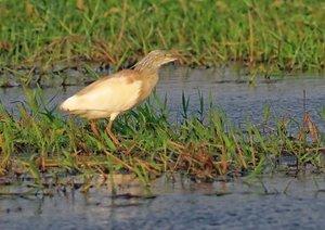 Vogelwelten am Chobe (Posterbuch DIN A4 quer)
