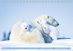 Eisbären: Lebenskünstler im Eis (Tischkalender 2016 DIN A5 quer)