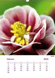 Pink (Wandkalender 2016 DIN A3 hoch)