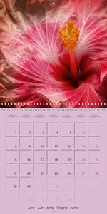 Beautiful Hibiscus Rosa Sinensis (Wall Calendar 2015 300 × 300 m