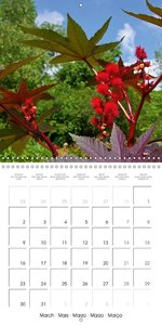Medicinal Plants (Wall Calendar 2015 300 × 300 mm Square)