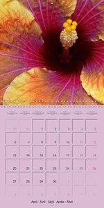 Beautiful Hibiscus Rosa Sinensis (Wall Calendar 2015 300 × 300 m