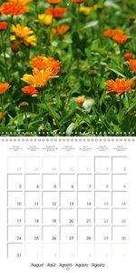 Medicinal Plants (Wall Calendar 2015 300 × 300 mm Square)