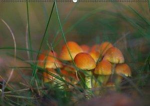 Pilze in unseren Wäldern (PosterbuchDIN A2 quer)