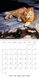 CUBA\'S CATS (Wall Calendar 2015 300 × 300 mm Square)