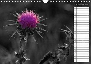 pötsch, r: Farbige Punkte in der Natur / Geburtstagskalender