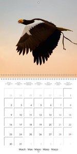 Graceful Birds Of Prey In The Air (Wall Calendar 2015 300 × 300