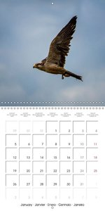 Graceful Birds Of Prey In The Air (Wall Calendar 2015 300 × 300