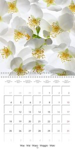 Bright Flowers (Wall Calendar 2015 300 × 300 mm Square)