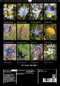 Les fleurs qui nous soignent (Calendrier mural 2015 DIN A3 verti