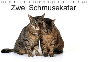 Zwei Schmusekater (Tischkalender 2016 DIN A5 quer)