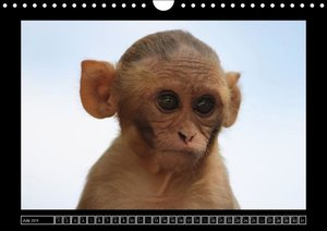 Rhesus Monkeys Part B / UK-Version (Wall Calendar 2015 DIN A4 La