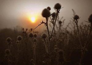 Sonnenaufgang im Teufelsmoor (Posterbuch DIN A2 quer)