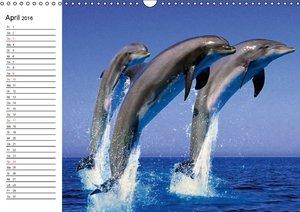 Delfine - Lächelnde Intelligenz (Wandkalender 2016 DIN A3 quer)
