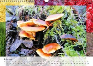 Swamplands Nature's Paintbox (Wall Calendar 2016 DIN A3 Landscap