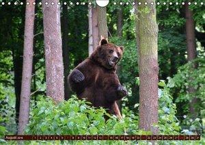 Bären. Unterwegs mit Meister Petz (Wandkalender 2016 DIN A4 quer