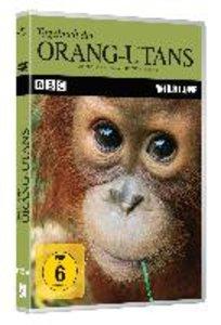 Tagebuch der Orang-Utans