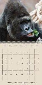 Gorillas . The Gentle Giants (Wall Calendar 2015 300 × 300 mm Sq