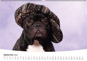 Bullys - Französische Bulldoggen 2016 (Wandkalender 2016 DIN A2