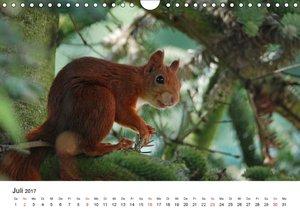 Die Sulzbachhörnchen - vom Leben einer hessischen Eichhörnchenfa