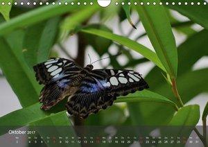 Zarte Schönheiten Schmetterlinge der Malaiischen Halbinsel