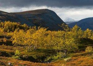 Wild Lapland (Poster Book DIN A4 Landscape)