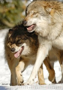Emotionale Momente: Der Wolf. (Wandkalender 2016 DIN A2 hoch)