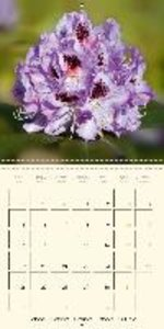 Beautiful flowers - rhododendrons (Wall Calendar 2015 300 &times