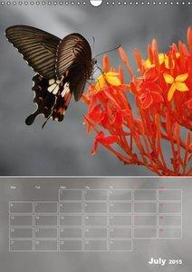 Delicate Beauties - Exotic Butterflies (Wall Calendar 2015 DIN A
