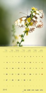 The Beauty Of Nature In Detail (Wall Calendar 2015 300 × 300 mm
