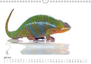 Der kleine Gecko und seine Freunde (Wandkalender 2016 DIN A4 que
