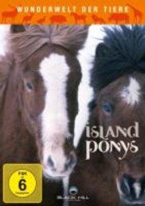 Wunderwelt der Tiere: Island Ponys
