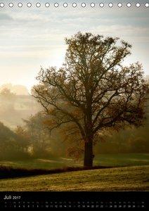 Energie der Bäume