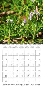 Aromatic Plants (Wall Calendar 2015 300 × 300 mm Square)