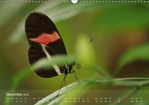 Schumann, B: Delicate Beauties Exotic Butterflies / UK-Versi