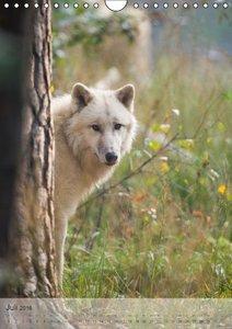 Emotionale Momente: Der Wolf. (Wandkalender 2016 DIN A4 hoch)