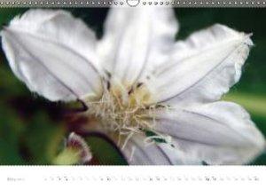 Tropical beach close-up Macro photography (Wall Calendar 2015 DI