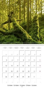 Saxon Switzerland (Wall Calendar 2015 300 × 300 mm Square)