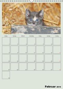 Katzenkinder (Wandkalender 2016 DIN A3 hoch)
