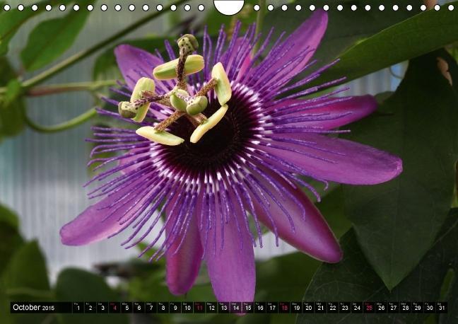 Cross, M: Passiflora Passion - World of Passion Flowers / UK - zum Schließen ins Bild klicken